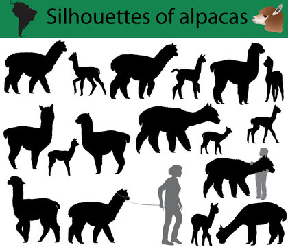 Collection of silhouettes of alpacas
