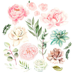 Watercolor set with flowers of succulents, roses, peony and leaves.
