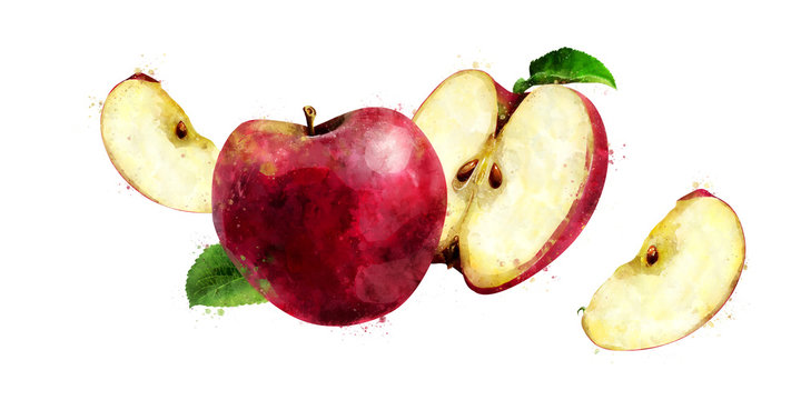 Red Apple on white background. Watercolor illustration