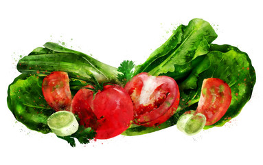 Tomato , cucumber and salad on white background. Watercolor illustration