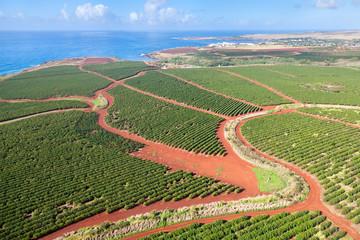 Foto auf Leinwand Olivgrun Coffee Plantations By The Coast, Kauai