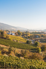Autumn landscape of rolling hills and vineyards on the Naramata Bench in the Okanagan Valley