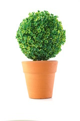green artificial plant isolated on white background