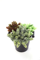 black metal flower pot with artificial plant isolated on white background