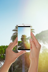 A tourist is taking a photo of the green palm tree is photographed with side flare by the sun on a mobile phone