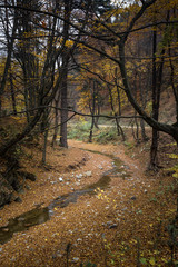 Beautiful countryside in autumn with trees and spring water