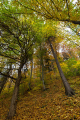 Beautiful countryside in autumn with trees in colorful foliage