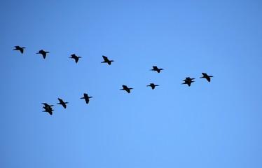 flock of birds on blue sky