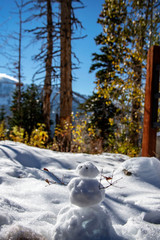 Little Snowman in a Big Forrest