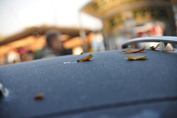 herbst autodach mit reif eis und herbstlaub laub