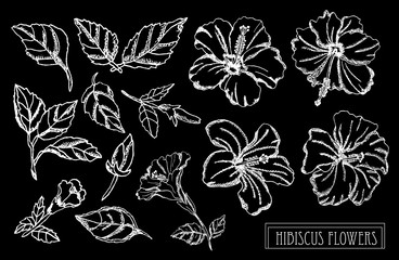 hand drawn floral decorations