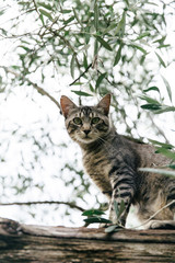 A cat in an olive tree in Southern Italy.