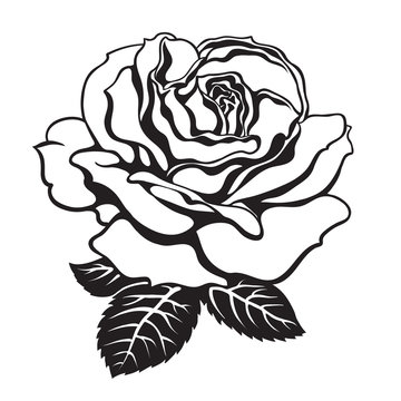 Black and white rose icon with leaves. Hand drawn vector.