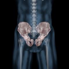 3d illustration of human body skeletal pelvis