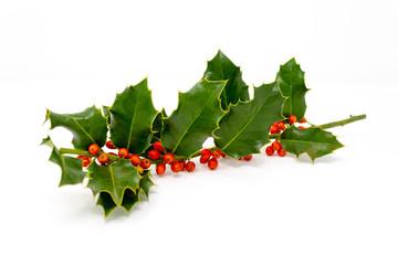Agrifoglio Ilex aquifolium Aquifoglio Alloro spinoso Pungitopo maggiore