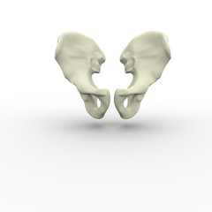 3d illustration of human body skeletal pelvis