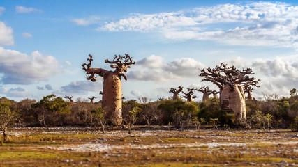 Baobab forest and savannah