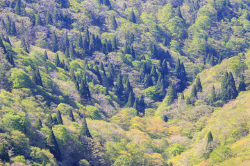Aerial view of heavily forested mountainside as trees show hints of orange in early fall