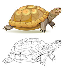 Fantasy illustration of cute turtle. Colorful and black and white page for coloring book. Worksheet for children and adults. Vector cartoon image.