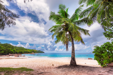 Palms on paradise Anse Lazio tropical beach at Praslin island, Seychelles island.