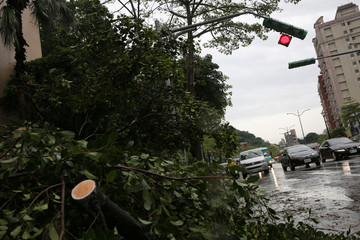 A fallen tree and a damaged traffic light is seen on a street in Taipei