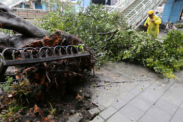 A worker takes a photo of a fallen tree on a street in Taipei after Taiwan braced for super typhoon Maria