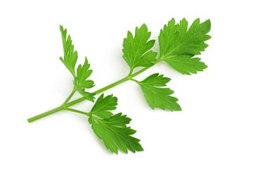 Fresh parsley sprig
