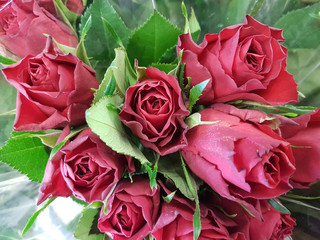 bouquet of buds roses