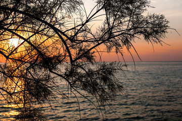 Sunset over the sea through the branches of tree. Photo taken on the west coast of Ionian island...