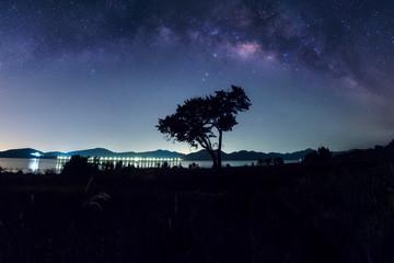 Milky way galaxy above the tree.