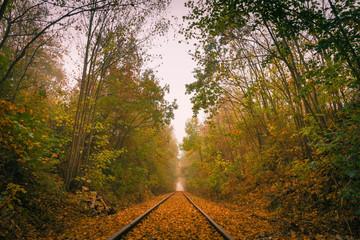 Bahnlinie im Herbst im Nebel