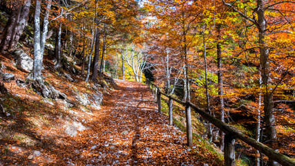 Autumn forest scenery with road of fall leaves..Footpath in scene autumn forest nature.