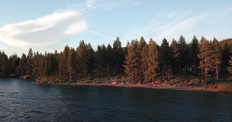 Picture of the forest on the shore of Lake Tahoe