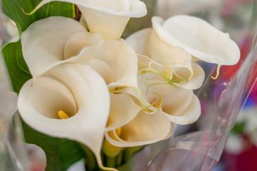 alcatraces blancos flores mexicanas