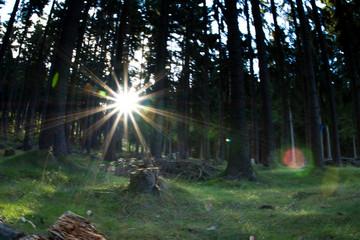 Jizerske Mountain - forest, autumn, Czech Republic