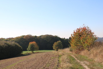 Schöner Herbsttag zwischen Wald und Wiese