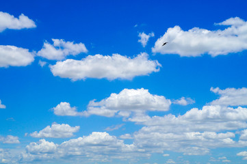 blue sky with white clouds and birds