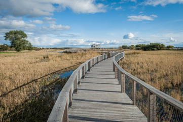 Boardwalk path through coastal meadow area. Boardwalk in Parnu coastal meadow hiking trail. Estonia. Baltic.