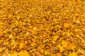 "Texture of the ""autumn carpet"". October, Moscow"