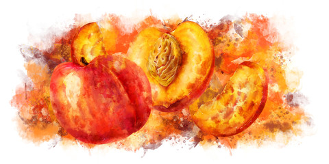 Peach on white background. Watercolor illustration
