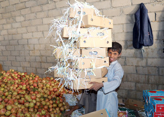 A boy holds boxes in which pomegranates are to be packed for export in Saada