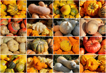 Various kinds of pumpkins, some of around 400 kinds grown this season, are pictured in this combination photo at Franzlbauer farm in Hintersdorf