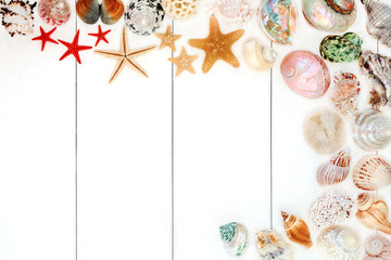 Seashell background border on rustic white wood. Top view