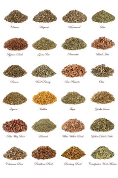 Herbs used in natural herbal medicine with leaves, flowers, roots and bark isolated on white background with titles.