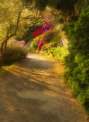 Way with shades in the well-tended garden with color flowers, version with a soft filter