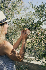Young woman picking up olives from an olive tree