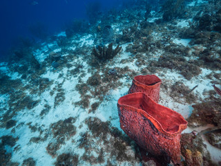 Seascape of coral reef in Caribbean Sea with sponge and various corals - wide angel of coral reef at scuba dive around Curaçao /Netherlands Antilles with big sponge in foreground and blue background