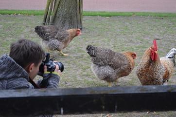 Chłopiec fotografuje kury