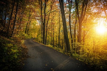 Wall Mural - Fall Foliage Forest Route