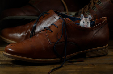 Close-up young mouse sits in  leather brown shoe on the wooden floors. Small DoF focus put only to mouse head.